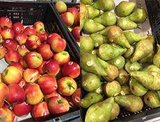 Biologisch afbreekbare stickers voor PLUS Appels en Peren