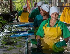 Ook PLUS komt in actie voor leefbaar loon bananensector